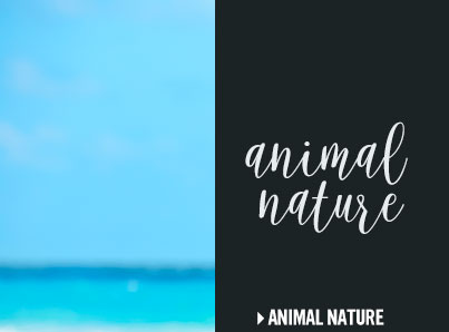 Click to shop animal nature.